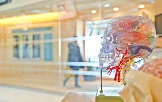 Von Hirn zu Hirn Neurokommunikation